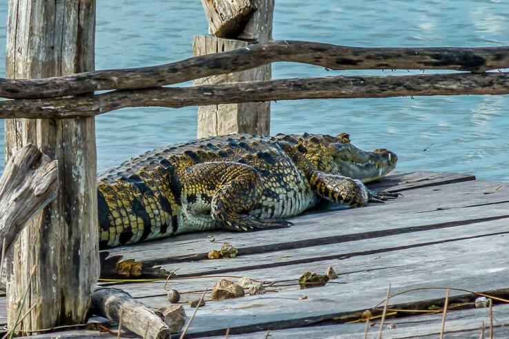 Day trips from Valladolid - ruins, cenotes and wildlife-1110697