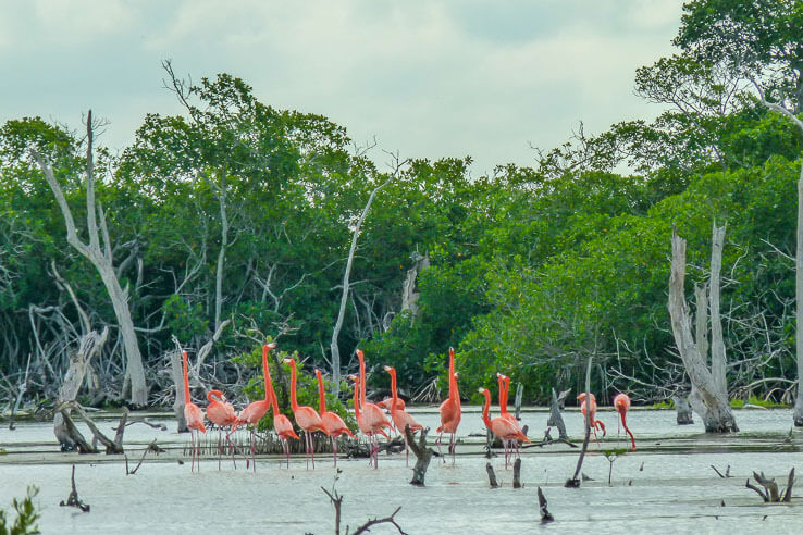 Day trips from Valladolid - ruins, cenotes and wildlife-1110830