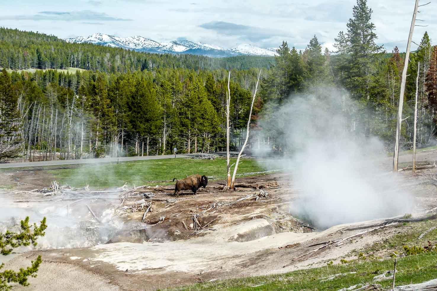 yellowstone national park descriptive essay